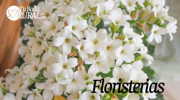 Flores y Complementos