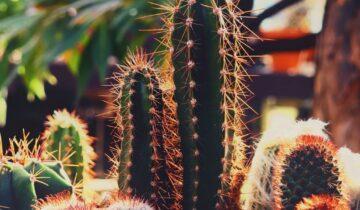 El Bosque BCN Cactus & Suculentas